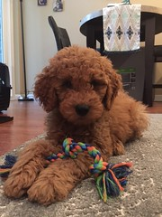 Candy's sweet boy Milo! - check out his instragram thetailsofmilo