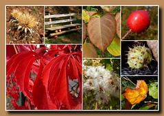 Herbst (Goldener Oktober) (jopol@pt.lu) Tags: herbst automne fall goldeneroktober altweibersommer indiansummer rëmeleng rumelange rümelingen lëtzebuerg luxemburg luxembourg collage