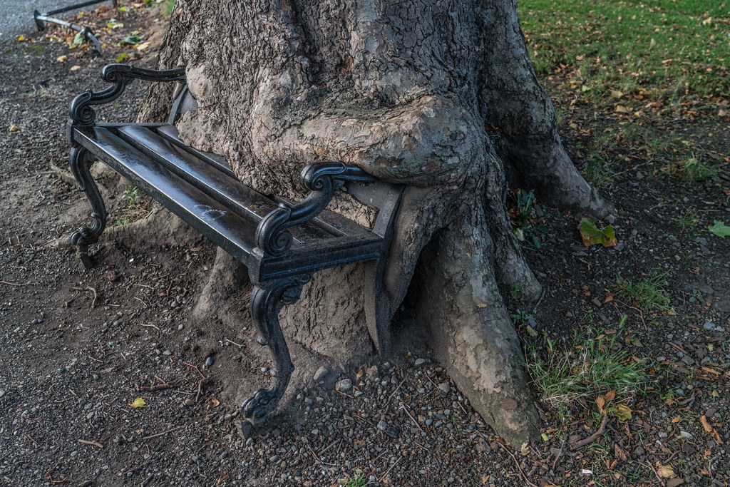I REFER TO THIS AS THE HUNGRY TREE [LOCATED IN KINGS INNS PUBLIC PARK DUBLIN 7]-133231