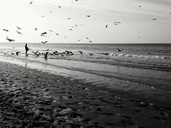 Bird Smartphone (Photo: Photos.dan2010 Merci.Thanks pour vos 1.M. Visites on Flickr)