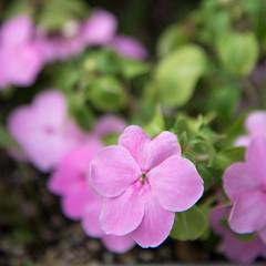 flower (Hideki Iba) Tags: nikon d850 2485 kobe japan