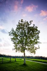 Nature... (Zeeyolq Photography) Tags: arbres ciel france jura lesrousses nature sky sunset tree bourgognefranchecomté fr