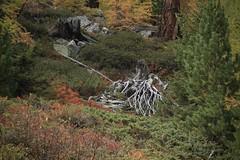vallon d'Arby (bulbocode909) Tags: valais suisse vallondarby latzoumaz montagnes nature automne forêts arbres vert rouge troncs rochers