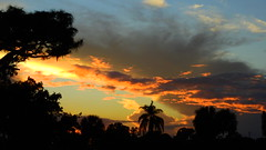 October 14th Sunset (Jim Mullhaupt) Tags: sunset sundown dusk sun evening endofday sky clouds color red gold orange pink yellow blue tree palm outdoor silhouette weather tropical exotic wallpaper landscape nikon coolpix p900 bradenton florida manateecounty jimmullhaupt cloudsstormssunsetssunrises photo flickr geographic picture pictures camera snapshot photography nikoncoolpixp900 nikonp900 coolpixp900