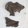 Roman worked leather from Mina dos Mouros, Campo de Jales, 2 (diffendale) Tags: pleiades:findspot=236495 jales campodejales minadosmouros couro leather cuoio leder cuero cuir кожа worked mining bergbau μεταλλευτική minería minière industriamineraria madencilik museum museo museu musée μουσείο музеи müze artifact display exhibit متحف ancient antico antique archaeological archeologico portugal πορτογαλία portogallo португалия البرتغال roman romano römisch romain ρωμαϊκόσ roma romen الرومانية римская