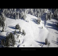 Ski Slopes (Bryan Koorstad) Tags: mountain mountains snow trees snowboard ski forest white slope slopes curve curves cold rainier volcano pretty beautiful majestic winter frozen ice