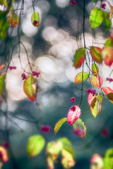 Earthly heaven II (Ans van de Sluis) Tags: ansvandesluis autumn bokeh bokehlicious fall flora floral flower forest leaf leaves nature sunny sunset woods spindletree colourful macro earthlyheaven