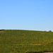 Windows Xp Hill - 21 years later