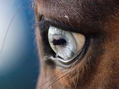 Blue's blue eye, Cumberbach, Cheshire. (kyliepics) Tags: olympus e520 evolt520 olympuszuikodigital1122mmf2835 darktable