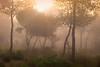Ghostly Figures, Cami de Cavalls (Neil Mair Photography) Tags: menorca balearics sunlight minorca spanish island trees camidecavalls neil mair neilmair morning fog sunburst humidity atmospheric