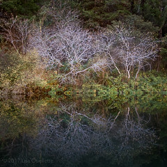 ghostly (Lisa Ouellette) Tags: autumn californiabuckeye tree slabcreek water reflections ripples lake branches