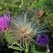 un soffio (Charl.otte) Tags: macro flower details delicate beautiful colors bokeh