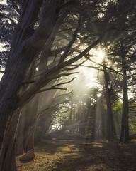 Misty Foggy Sunbeams (pixelmama) Tags: pixelmama mossbeach fitzgeraldmarinereserve halfmoonbay chasinglight sunbeams california mossbeachwoods