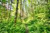 East Tiger Trail (johnwporter) Tags: hiking scramble climbing cascades mountains stateforest issaquahalps tigermountain 徒步 爬行 攀登 喀斯喀特山脈 山 州立森林 伊薩闊阿爾卑斯 虎山