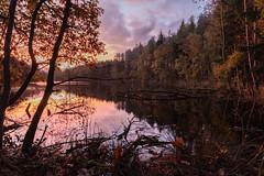 Sun Up (RD400e) Tags: canon eos 5dsr 24mm tse mk2 tiltshift gitzo delamere dead lake autumn sunrise water trees reflections