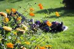 Sieste ! (Nykaule) Tags: sieste vegetal orange faibleprofondeurdechamps pdc grenoble marathonphoto 2017 nikon