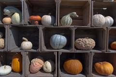 Autumn (JCTopping) Tags: wv 6d 24mm food color crates usa orrsfarmmarket boxes westvirginia farm canon fallautumn squash pumpkins martinsburg unitedstates us