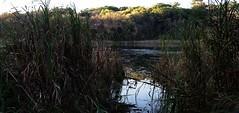 Sunset, Crosby Lake Farm (TwinCitiesSeen) Tags: saintpaul minnesota twincitiesseen twincities canon6d tamron2875mm crosbylakefarm sunset