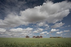 Old Storage Sheds In An Oat Field (Edmonton Ken) Tags: oats avena grain grass green field farm harvest big blue sky puffy clouds rural alberta travel tourism wide angle silo building wood red white storage shed canada agriculture