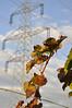 Niederösterreich Weinviertel Leobendorf_DSC0222A (reinhard_srb) Tags: niederösterreich weinviertel leobendorf weingarten trauben wein sonne abendsonne natur herbst weinstock trieb mast himmel bewölung wolke hochspannungsleitung stromleitung elektrizität verdorrt strebe eisen isolator kabel