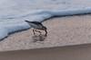 20170905 Bethany Sunrise-22.jpg (ashleyrm) Tags: beach delawarebeach bethanybeach towershores atlanticocean vacation travel sunrise canon canonrebel canonrebelt4i nature outdoors landscape waves ocean