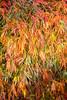 IMG_3054.jpg (tybach) Tags: canon750d arboretum westonbirt