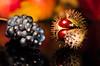 Autumn Still Life (Theo Crazzolara) Tags: stilllife stillleben autumn fall herbst macro wein trauben weintrauben kastanie colour color food foodporn grape chestnut golden fresh natural