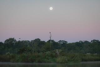 Bayou Vista
