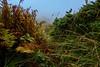 Under the water (fede.piste) Tags: forest rain italy abetone colors sony alpha 6000 path water bosco landschaft landscape