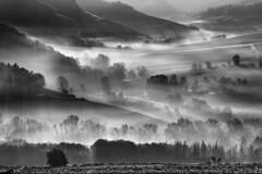_DSC3408 (Giuseppe Cocchieri) Tags: landscape paesaggio mist nebbia fog bw blackwhite blackandwhite biancoenero bianconero bianco black white nero nature natura