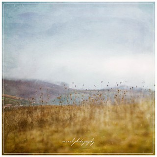 autumn fields