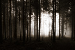 Sombre (der_peste) Tags: fog mist foggy misty sombre forest trees light sun dark haunted moody mood atmosphere fear