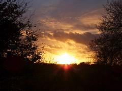 5591 Ynys Môn sunset (Andy - Busyyyyyyyyy) Tags: bbb branches ccc clouds ggg goldenhour nightshot nnn ooo orange ppp pylon silhouette sss sunet tree ttt yellow ynysmôn yyy