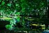 A little stream in the green (kazs2307) Tags: shore green stream garden hokkaido 真鍋庭園 緑 せせらぎ 北海道
