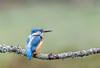 untitled-4 (graemecave) Tags: kingfisher canon canon5dmk111 bird birds fish colours canontest 100400l leeds yorkshire england blue exposure green mk111 uk portrait river water exposur zz