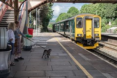 Straining at the leash (Nodding Pig) Tags: yatton railway station train northsomerset england greatbritain uk 2017 class150 dieselmultipleunit dmu 150263 gwr greatwesternrailway dog 201705316593101