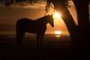 Fall Sunset (Eastbaygirl925) Tags: bayarea california sunset ranchlife silhouette equine horses settingsun fall colors beauty