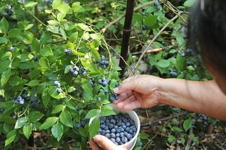 I found my thrill on Blueberry-hill
