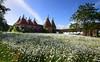 Sissinghurst Castle Gardens - Kent (Mark Wordy) Tags: sissinghurstcastlegardens nationaltrust kent wildflowers meadow daisies oasthouse sunset