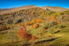Autumn in Morinesio (einaz80) Tags: morinesio autumn autunno fall stroppo maira valle val valmaira vallemaira colors colours colori color mairavalley mairatal nebin monte mount mountain montagne montagna montenebin