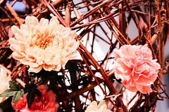 (tamaraschwenk) Tags: wedding decoration flowers
