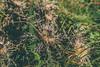 Felsenmeer Wental 2017 (onkelhowdy) Tags: felsenmeer wental herbst ostalb