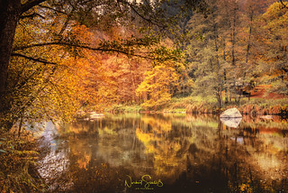 Flashed by autumn colors ... river Ilz, Bavarian Forest