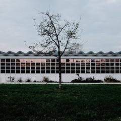 Baum am Velodrom - November 2017 (richardvonschroeter) Tags: berlin germany deutschland friedrichshain velodrom ddr gdr fujifilm x100t