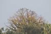 Colori autunnali ovattati da una leggera nebbia (Carla@) Tags: liguria italia europa storno starling sturnusvulgaris nebbia mfcc canon alittlebeauty