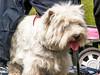 westie (pamelaadam) Tags: digital scotland summer dundee meetup animal dog westie june 2007 fotolog thebiggestgroup