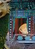 Monk drumming (CGDana) Tags: seoul korea buddah temple night city urban canon 7d