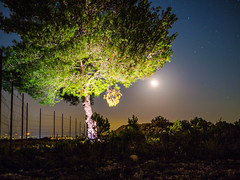 Moonlight over Tree (karlogd) Tags: fence moon moonlight tree space sky stars galaxy cosmos grass earth planets night nightphoto nightphotography astro astrophotography longexposure longexposureshot longexposurephoto exposure astronomy astrography universe beautiful starrynight skyshot nature olympus omd em10 markii panasonic lumix 25mm 17 shine glow light