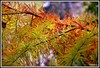 Feuillage d'automne (Les photos de LN) Tags: feuillage automne couleurs nuances teintes nature parc majolan gironde blanquefort verdure végétation