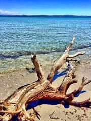 Spiaggia Giunco, Carloforte, Isola di San Pietro, Sardinia, Italy. (Massimo Virgilio - Metapolitica) Tags: beach sea sun nature summer italy sardinia giunco spiaggia isoladisanpietro carloforte
